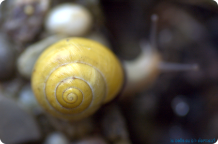 Escargots2