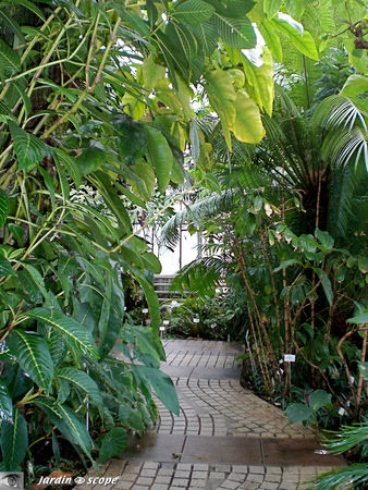 CIMG1416_Foret_Tropicale