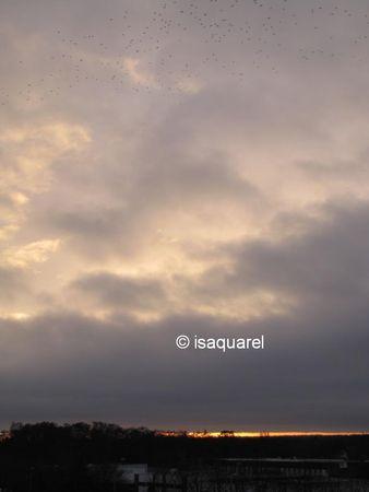 soleil_levant_et_oiseaux_du_27_12_2009