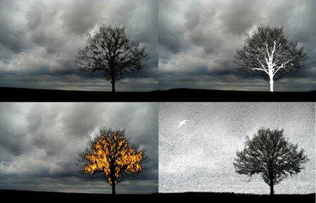 arbres_feu_oiseau_crayon_r_d
