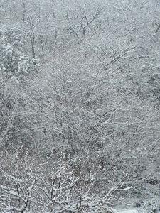 neige_2009_003
