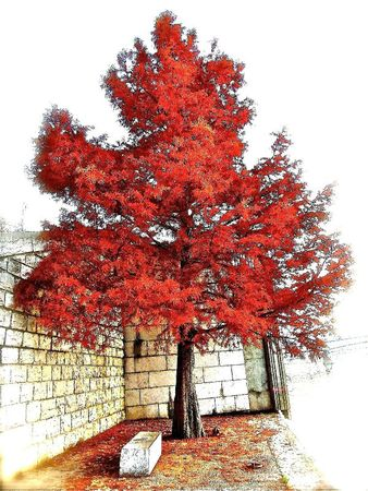 _ (RED) _ Tree