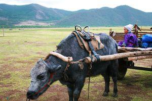 Mongolie_Juin_2008_163