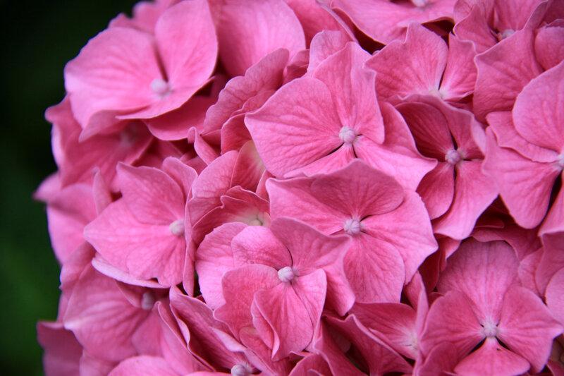 Instants fleuris du jour (35)