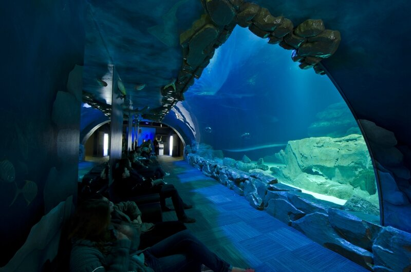 Tunnel des requins ©Cineaqua