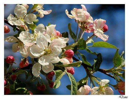 cerisier_et_ciel_bleu