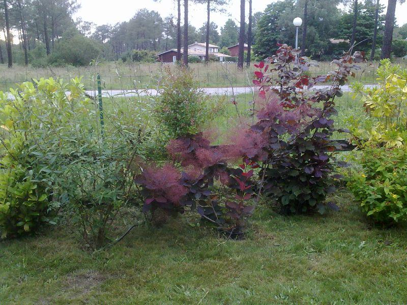 17062010233 photo de plantation de haie vari e antoine et ses jardins. Black Bedroom Furniture Sets. Home Design Ideas