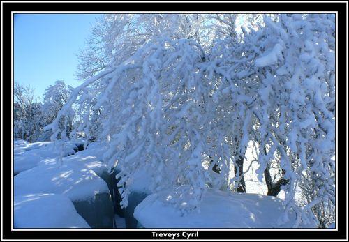 2008 12 27 Arbres enneigé et givrés