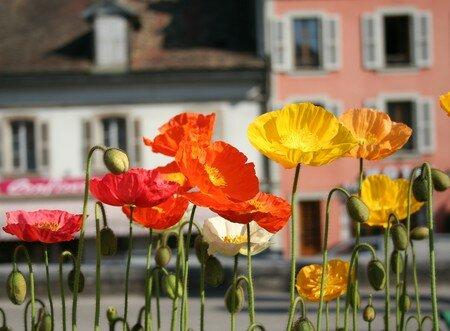 flowers_nyon