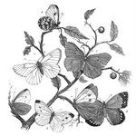 butterflybranch-graphicsfairy005c