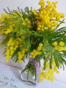 bouquet_mimosa_056