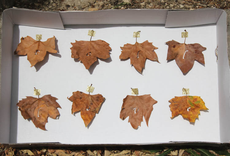 DIY_fall_in_love_leaves_garland_step_7