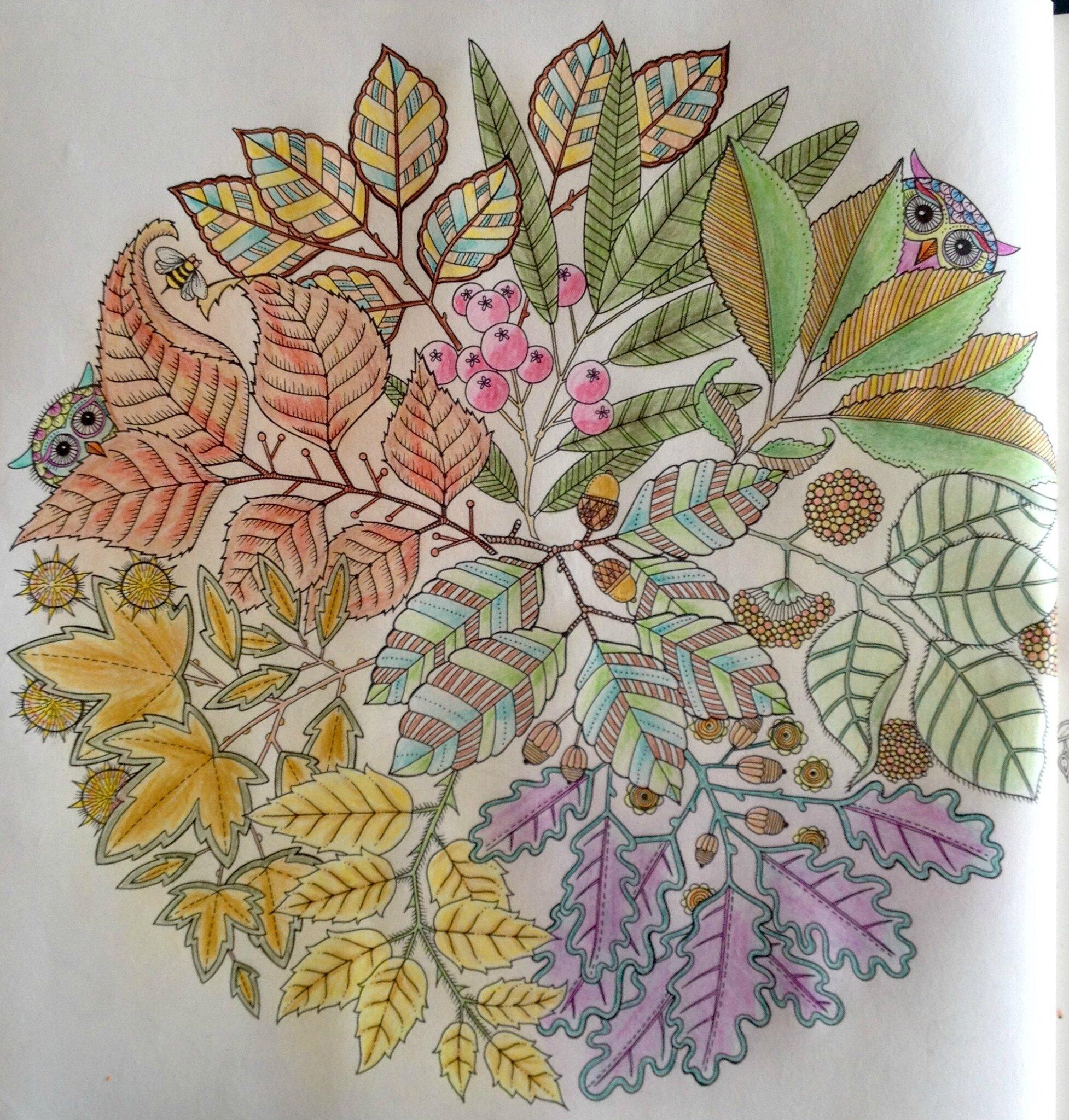 Coloriage 6 jardin secret mandala fleurs hibou dans for O jardin secret suresnes