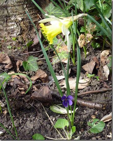 Jardin-20.03.2011 030