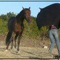 18) 10 Septembre 2007 - Cheval de greluche tu seras