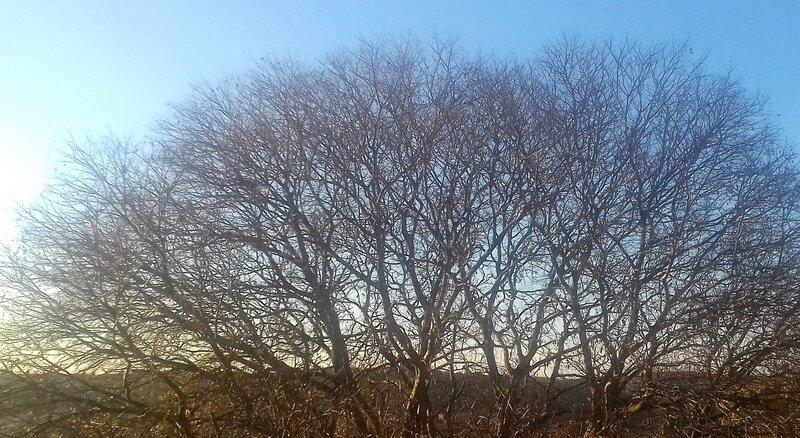 arbre hiver (2)