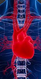 heart_chest