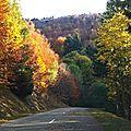 En automne, pourquoi les feuilles changent-elles de couleur ?