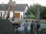 girafe22f