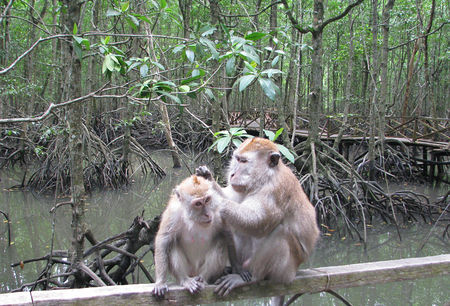 couple_de_singes