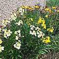Jardin au printemps...