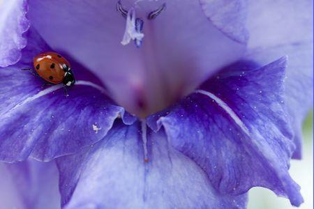 Macro iris 031 bis