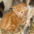 2008 04 10 Lee petit chat tigré de Papillon à bientôt 1 mois