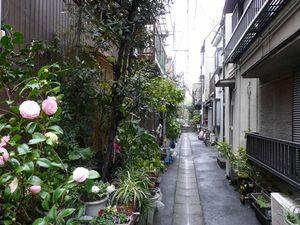 Canalblog_Rues_Plantes06_Tsukishima