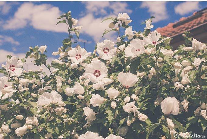 fleurs_jardin-25