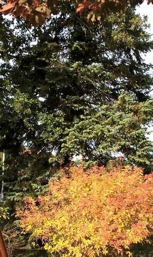 jardin début octobre 2017 les couleurs