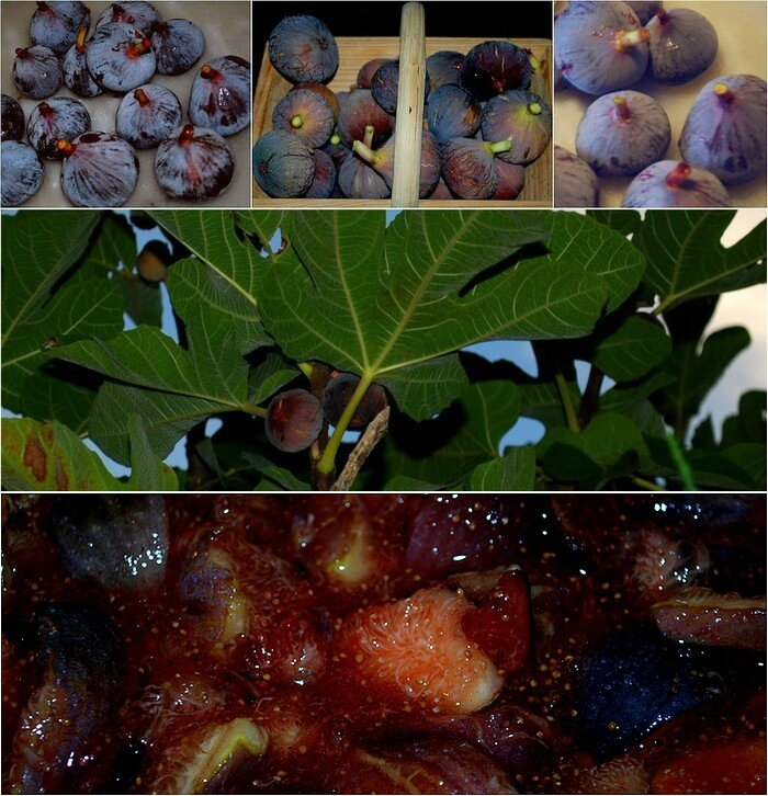 figues2015-2