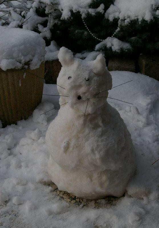 chat_de_neige