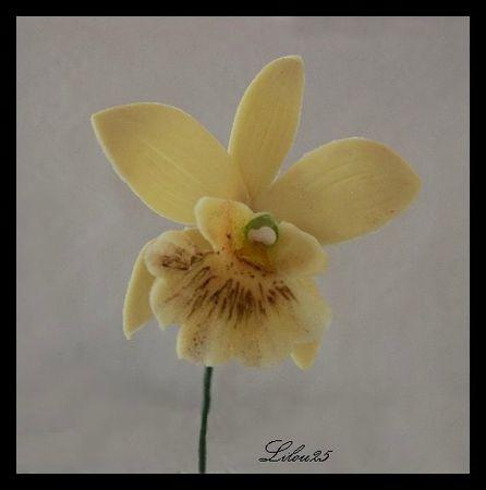OrchidéeBord