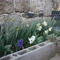 2009 04 09 Narcisses et Jacinthes