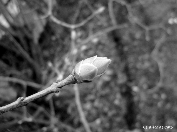3 Le printemps en macro 3 - Copie