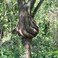 m-Les arbres- (53)