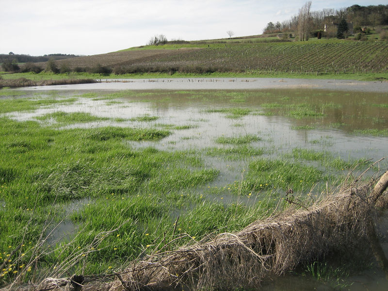 Inondation au Thoureil