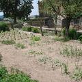 2008 07 02 Mon jardin