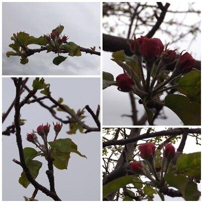 Jardin_avril__14_