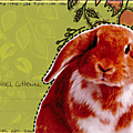 mail art lapin