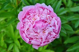 💆Masque Hydratant douceur : Poudre de Brahmi/Poudre de Rose de Damas🌹/Miel🐝/Lait d'avoine🌾/Poudre de banane🍌