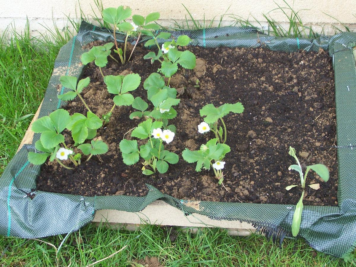 Un carr potager recyclage et cie - Carre de jardin en palette ...