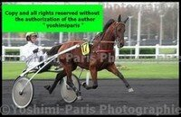 Master Grand National du Trot Paris-Turf 6 decembre 2015,heat Tornado Bello,copie blog,©Yoshimi-Paris Photographie,I7D_6612 (3)