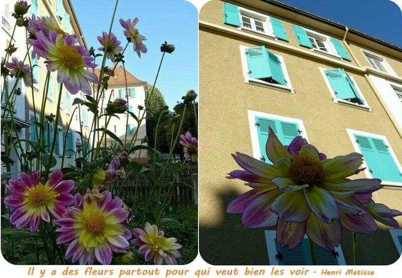 Quartier Drouot - Fleurs du jardinet