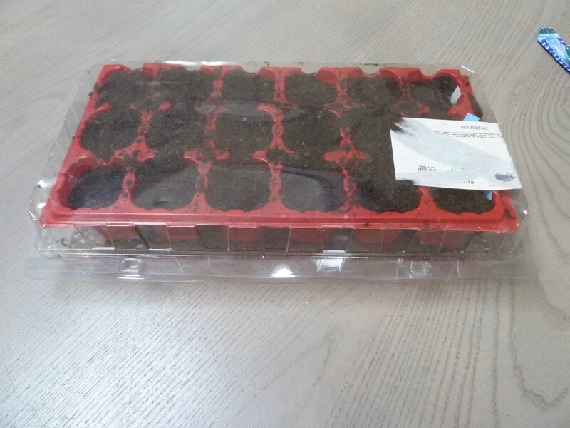 14-semis tomates (1)