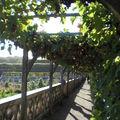 Allée de Vignes