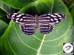 Jardin des papillons Hunawihr 09
