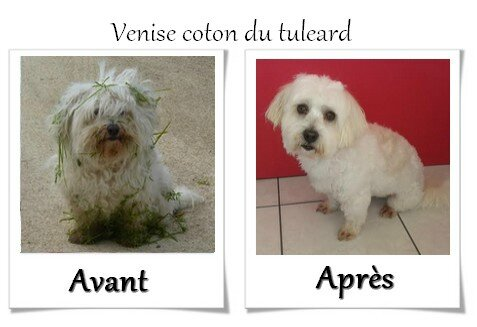 DOG CHRIS AVANT APRES05