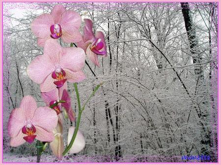 Arbres_givr_s_et_orchid_e_Monette