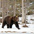 Histoire de voyage - canada : quels animaux puis je rencontrer dans l'ouest canadien? comment réagir?